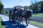 workhorse-1