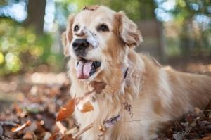 one-happy-dog
