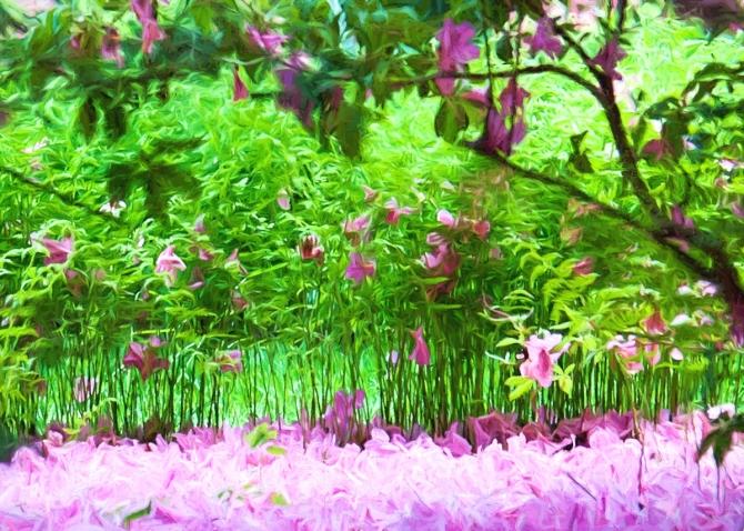 blanket-of-lavender
