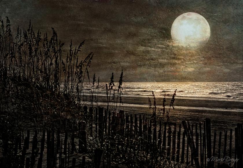 Moonlit-stroll
