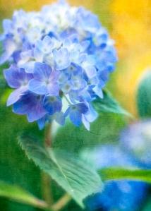 Feelling-a-little-blue