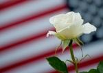Memorial-Rose
