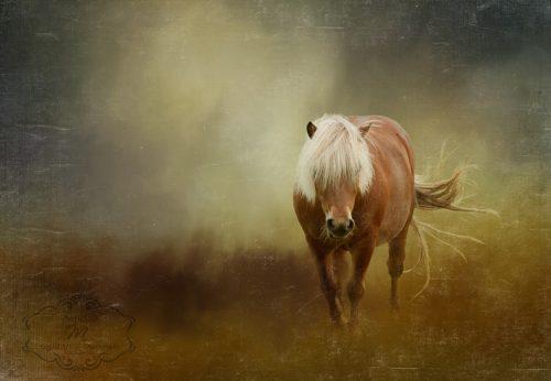 pony-power