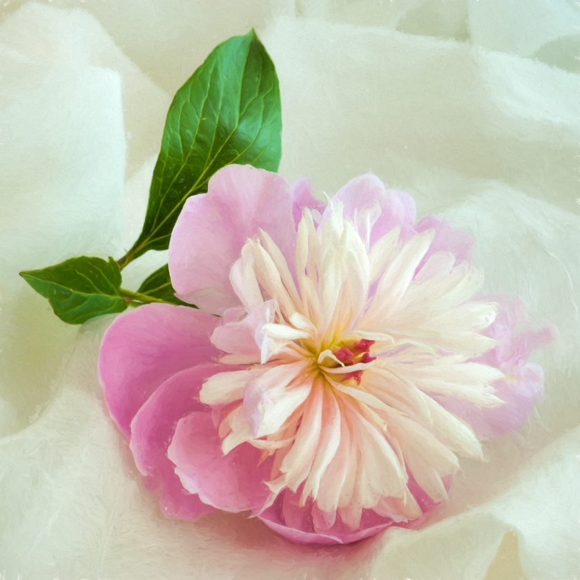 Painterly-Peony-copy