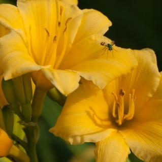 sunny-fly