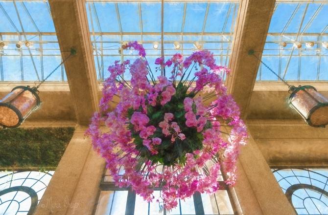 sky-light-orchid